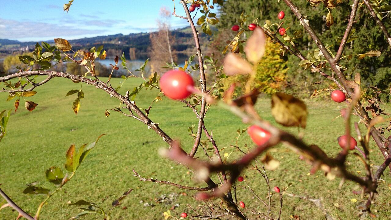 Herbstliche Wanderung am Grüntensee