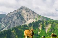 Wanderung im Tannheimer Tal