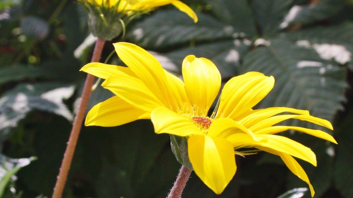 Dekoration Blumen